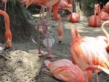 Behandla som ett barn den rosa flamingo arkivbilder