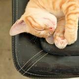 Behandla som ett barn den söta drömmen för kattsömn Fotografering för Bildbyråer