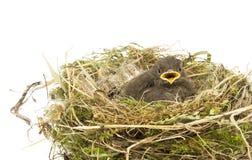 Behandla som ett barn den små sparrowen Arkivfoton
