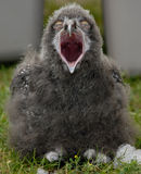 behandla som ett barn den snöig owlen royaltyfri foto