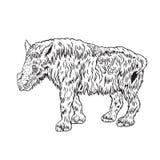 Behandla som ett barn den ulliga noshörningen Arkivbilder