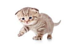 behandla som ett barn det första kattungemomentet arkivbilder