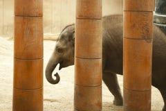 2009 behandla som ett barn det tagna elefantfotoet Royaltyfri Fotografi