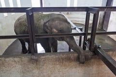 2009 behandla som ett barn det tagna elefantfotoet Royaltyfria Foton