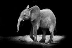 2009 behandla som ett barn det tagna elefantfotoet Arkivfoto