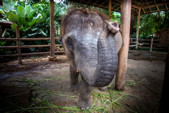 2009 behandla som ett barn det tagna elefantfotoet Arkivbild