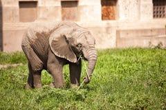 2009 behandla som ett barn det tagna elefantfotoet Arkivfoton