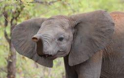 2009 behandla som ett barn det tagna elefantfotoet Royaltyfri Foto