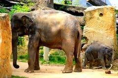 2009 behandla som ett barn det tagna elefantfotoet Royaltyfri Bild