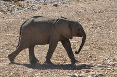 2009 behandla som ett barn det tagna elefantfotoet Arkivbilder