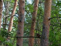 Behandla som ett barn ekorren på ett träd Royaltyfri Foto
