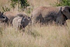 Behandla som ett barn elefanten som den är skämtsam i gräset Fotografering för Bildbyråer
