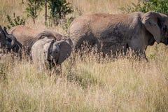 Behandla som ett barn elefanten som den är skämtsam i gräset Royaltyfria Bilder