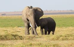 behandla som ett barn elefanten dess moder Royaltyfri Bild