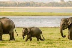 Behandla som ett barn elefanten som går med vakten Fotografering för Bildbyråer