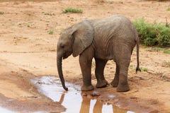 Behandla som ett barn elefanten i Afrika Royaltyfri Bild