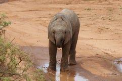 Behandla som ett barn elefanten i Afrika Arkivfoto