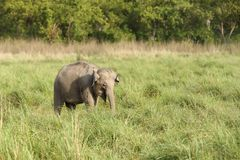 Behandla som ett barn elefanten i grässlätten Arkivfoton