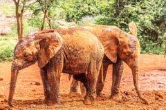 behandla som ett barn elefanten kenya royaltyfria bilder