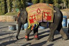 Behandla som ett barn elefanten, Kina Royaltyfria Foton