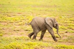 Behandla som ett barn elefanten som kommer ut ur träsket Royaltyfri Fotografi