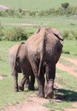 Behandla som ett barn elefanten med modern i Afrika Royaltyfria Bilder