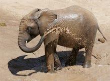 Behandla som ett barn elefanten med själv sprej med vatten royaltyfri foto