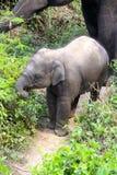 Behandla som ett barn elefanten och modern ut för en promenad Royaltyfri Foto