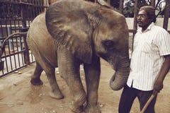 Behandla som ett barn elefanten på den Karachi zoo med vaktmästaren Royaltyfria Bilder