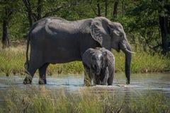 Behandla som ett barn elefanten som framme dricker av moder Royaltyfria Foton
