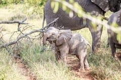 Behandla som ett barn elefanten som spelar på vägen Royaltyfri Foto