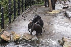 Behandla som ett barn elefanter Royaltyfri Fotografi