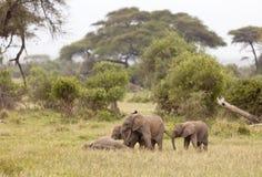 Behandla som ett barn elefanter, Kenya royaltyfri foto