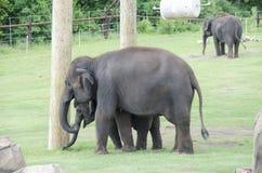 behandla som ett barn elefantmodern Royaltyfria Foton