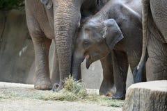 behandla som ett barn elefantmodern Fotografering för Bildbyråer