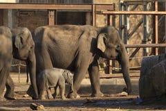 behandla som ett barn elefantmodern Royaltyfri Foto