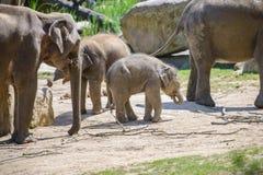 behandla som ett barn elefantmodern Royaltyfria Bilder