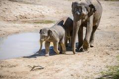 behandla som ett barn elefantmodern Arkivbilder