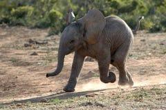 behandla som ett barn elefantrunning royaltyfri bild
