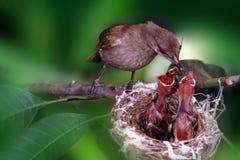 behandla som ett barn fågelmatning Arkivbild