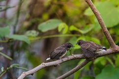 Behandla som ett barn fågeln Royaltyfri Foto