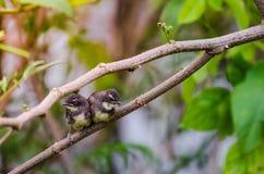 Behandla som ett barn fågeln Royaltyfri Fotografi