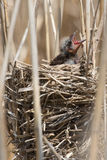 Behandla som ett barn fågeln Royaltyfri Bild