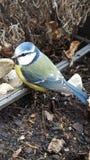 Behandla som ett barn fågeln Royaltyfria Bilder