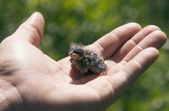 Behandla som ett barn fågeln Arkivfoton