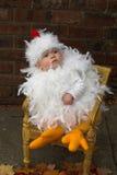 behandla som ett barn fågelungen royaltyfri fotografi