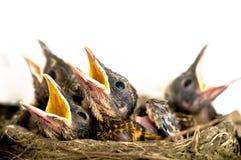 behandla som ett barn fåglar royaltyfria bilder