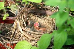 behandla som ett barn fåglar Royaltyfri Foto