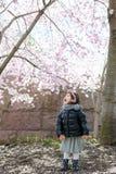 Behandla som ett barn flickan tycker om Cherry Blossom arkivfoto