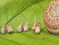 behandla som ett barn gående home snails för trädgården Royaltyfri Fotografi